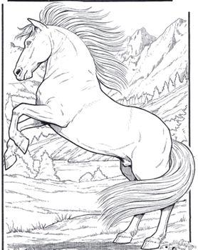 pferd5